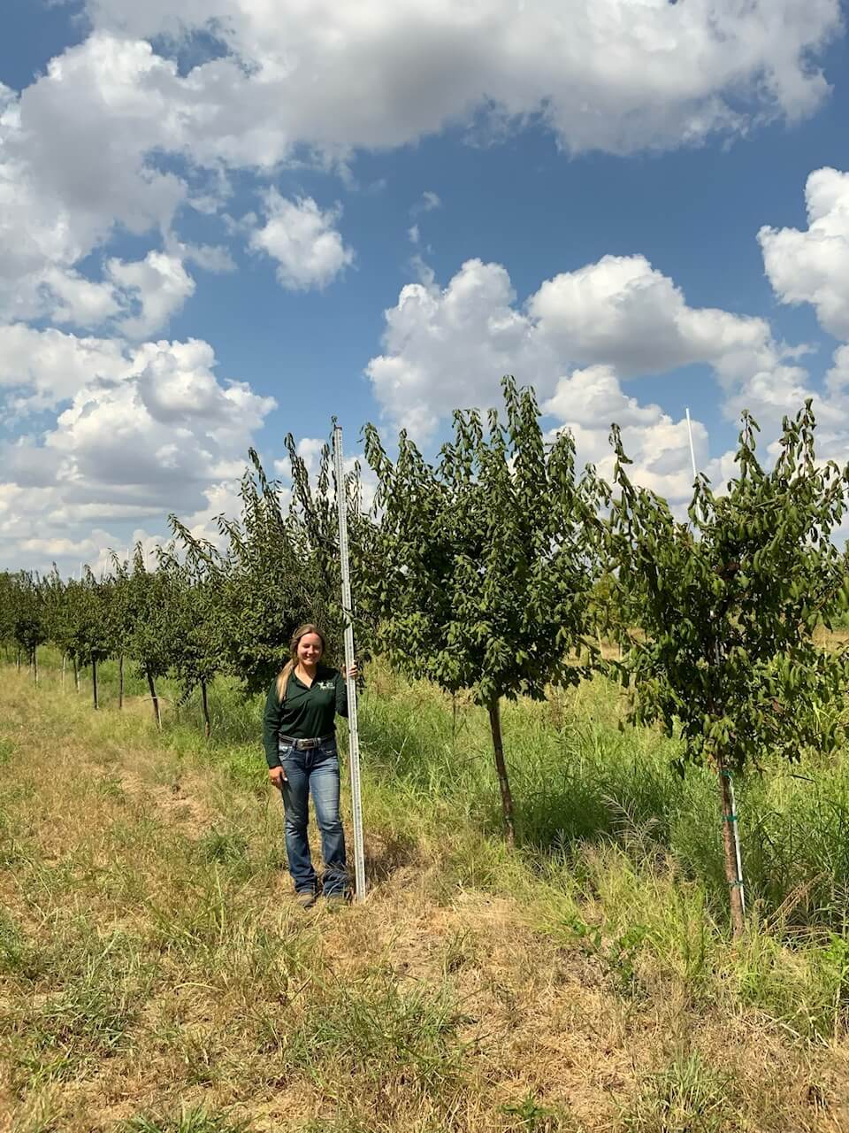 2 inch mexican plum trees