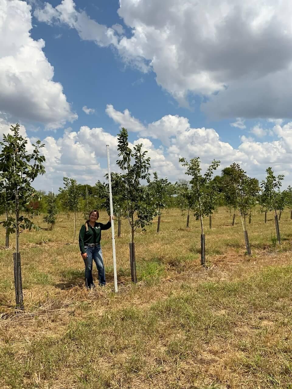 2 inch texas ash trees
