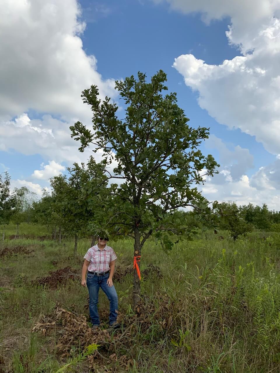 6 inch burr oak trees